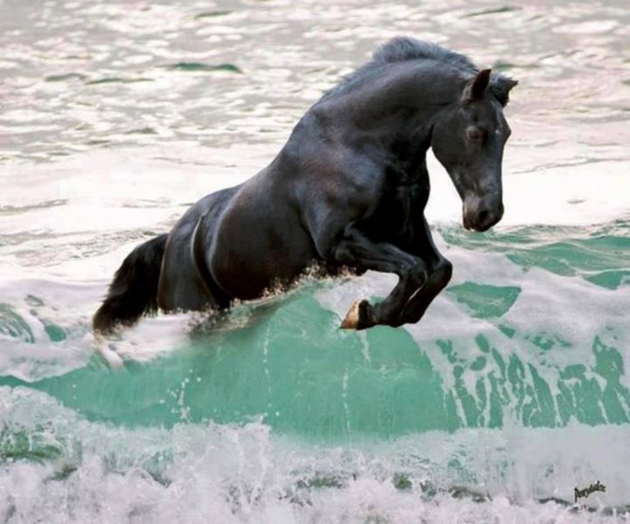 cheval sans stress